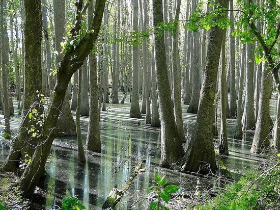 great-dismal-swamp-national
